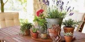 Planter & Pots